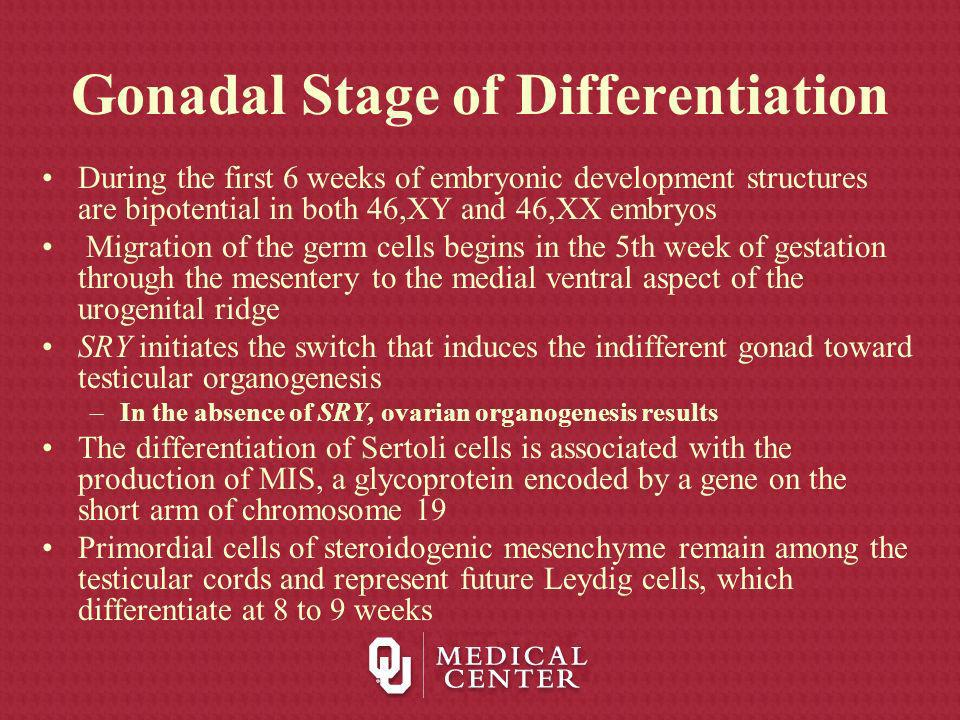 Gonadal Stage of Differentiation During the first 6 weeks of embryonic development structures are bipotential in both 46,XY and 46,XX embryos Migratio