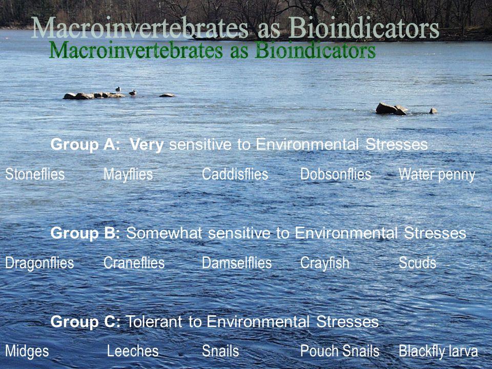 Group A: Very sensitive to Environmental Stresses StonefliesMayfliesCaddisfliesDobsonfliesWater penny Group B: Somewhat sensitive to Environmental Str