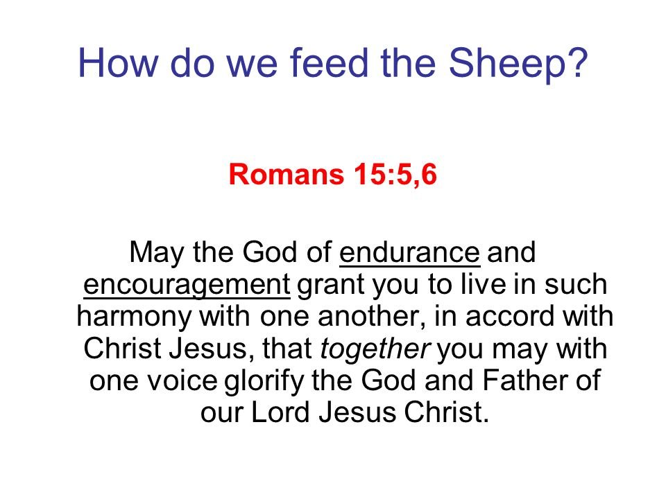 How do we feed the Sheep? Romans 15:5,6 May the God of endurance and encouragement grant you to live in such harmony with one another, in accord with