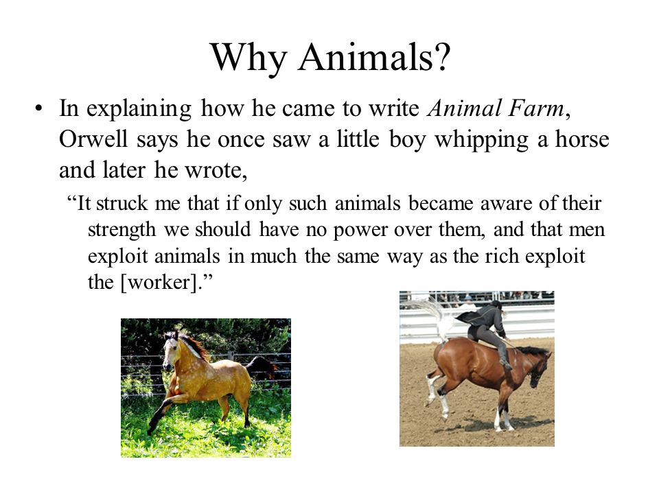 Why Animals? In explaining how he came to write Animal Farm, Orwell says he once saw a little boy whipping a horse and later he wrote, It struck me th
