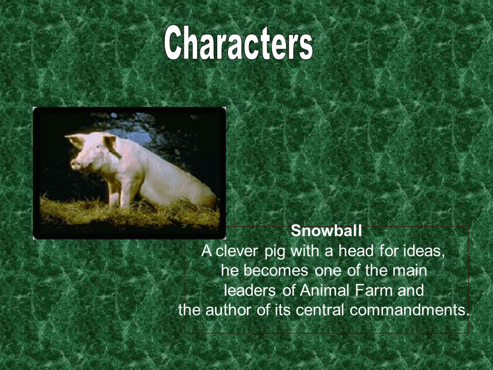 Snowball A clever pig with a head for ideas, he becomes one of the main leaders of Animal Farm and the author of its central commandments.