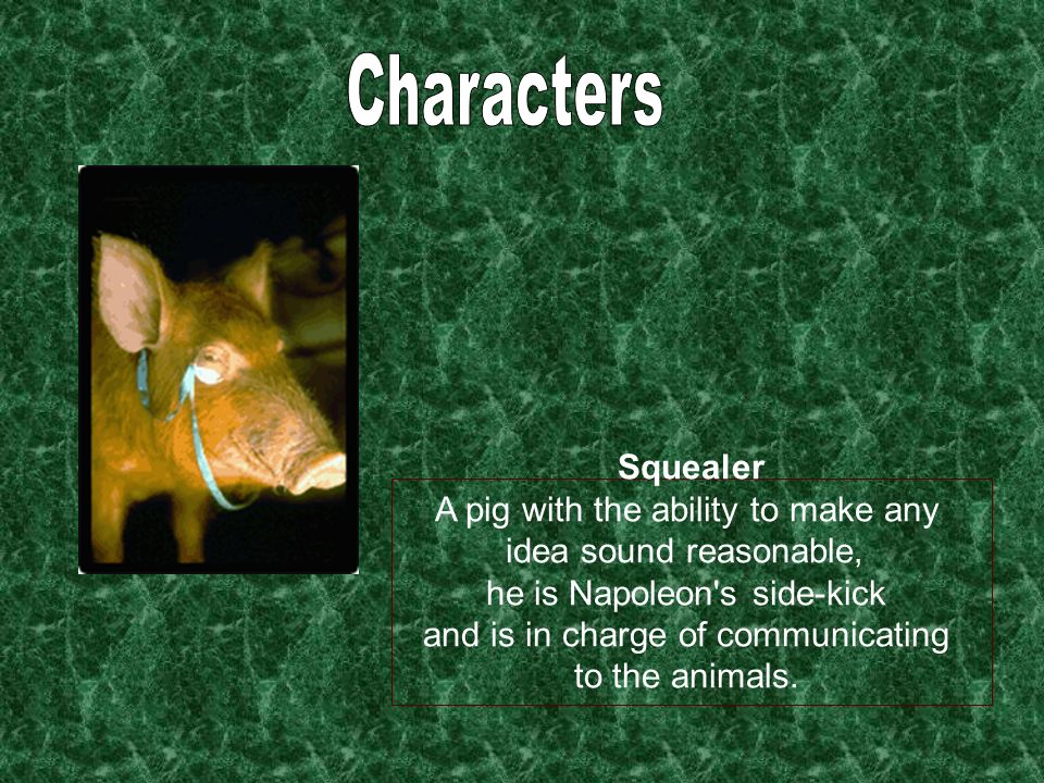 Squealer A pig with the ability to make any idea sound reasonable, he is Napoleon's side-kick and is in charge of communicating to the animals.