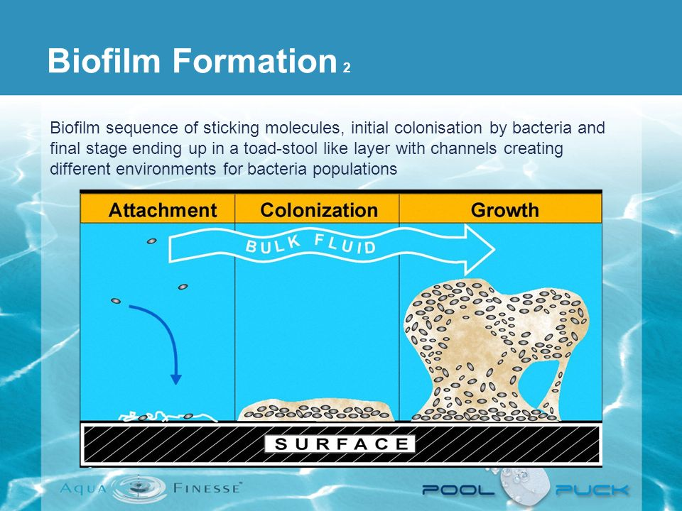 Biofilm Formation 2 Biofilm sequence of sticking molecules, initial colonisation by bacteria and final stage ending up in a toad-stool like layer with