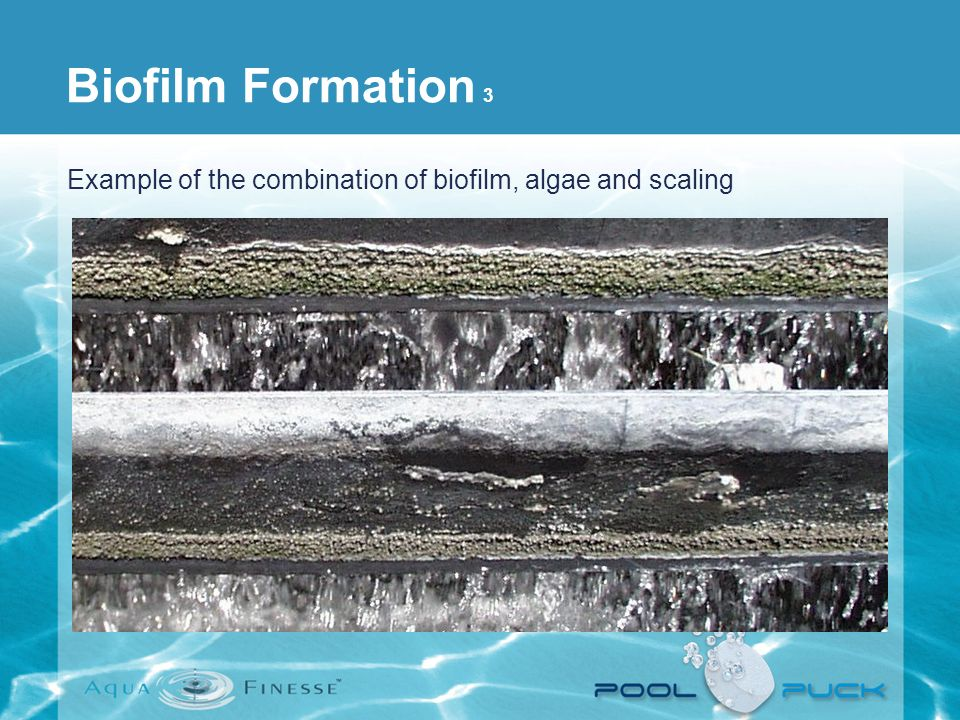 Example of the combination of biofilm, algae and scaling Biofilm Formation 3