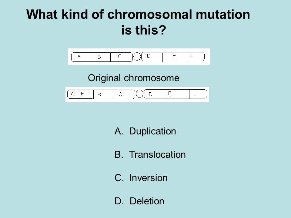 What kind of chromosomal mutation is this? Original chromosome A.Duplication B.Translocation C.Inversion D. Deletion