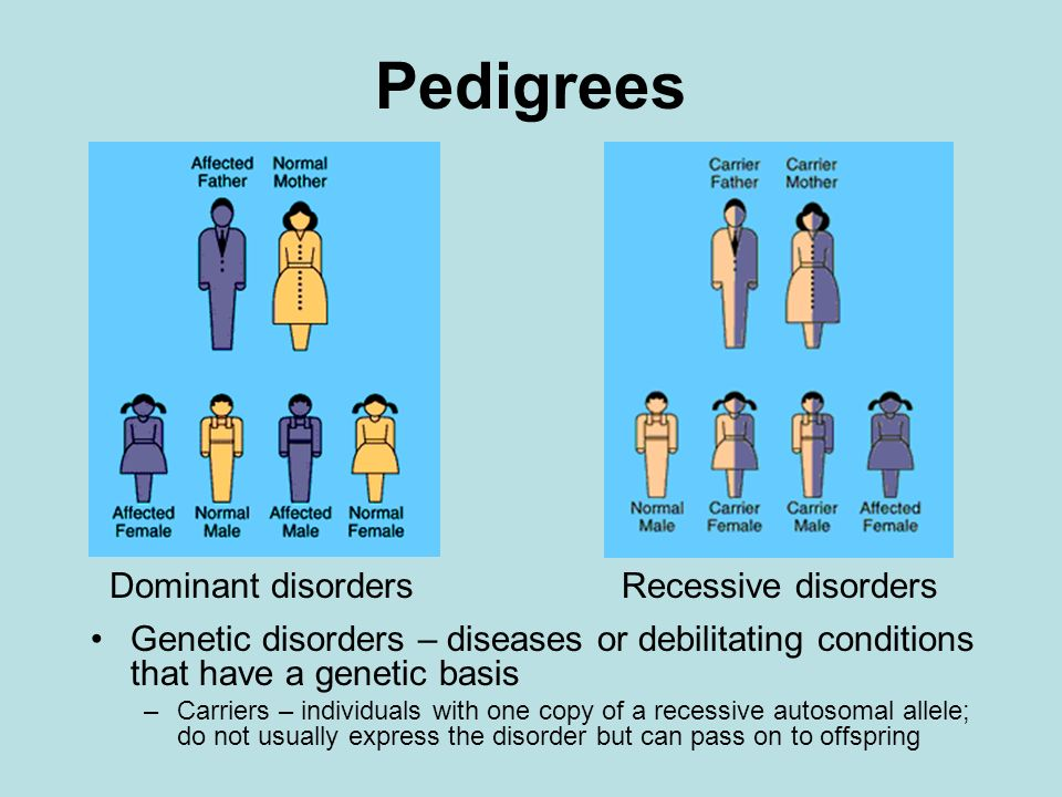 Pedigrees Genetic disorders – diseases or debilitating conditions that have a genetic basis –Carriers – individuals with one copy of a recessive autos