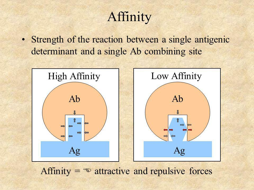 Affinity = attractive and repulsive forces Ab Ag High Affinity Ab Ag Low Affinity Affinity Strength of the reaction between a single antigenic determi
