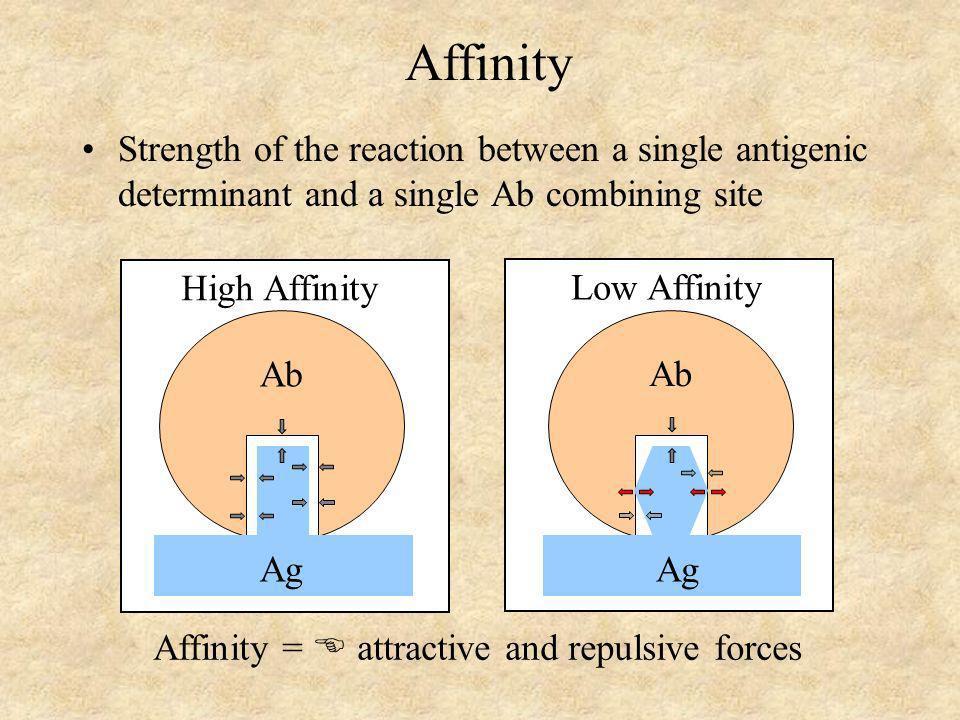 Calculation of Affinity Ag + Ab Ag-Ab K eq = [Ag-Ab] [Ag] x [Ab] Applying the Law of Mass Action: