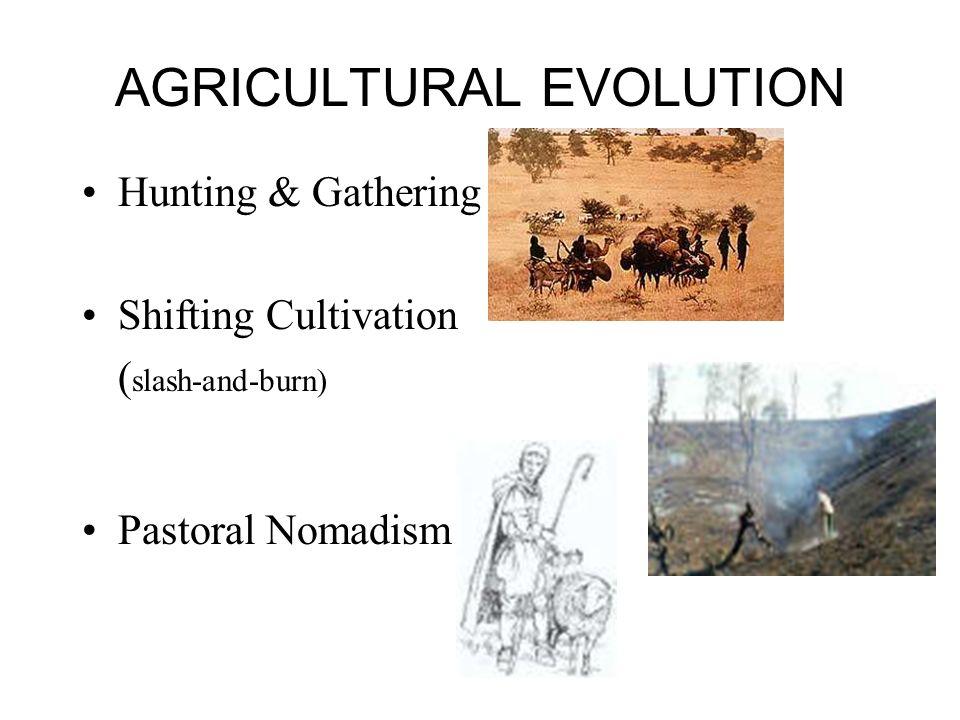 AGRICULTURAL EVOLUTION Hunting & Gathering Shifting Cultivation ( slash-and-burn) Pastoral Nomadism