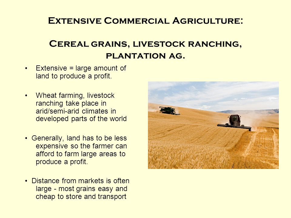 Extensive Commercial Agriculture: Cereal grains, livestock ranching, plantation ag. Extensive = large amount of land to produce a profit. Wheat farmin