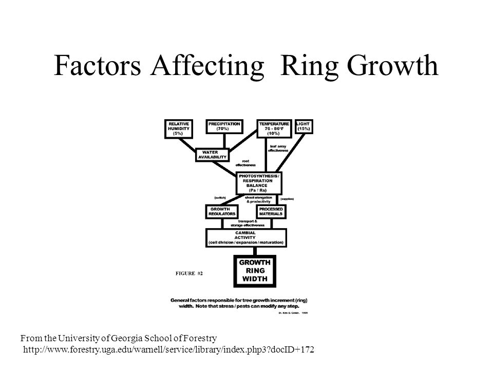 Factors Affecting Ring Growth From the University of Georgia School of Forestry http://www.forestry.uga.edu/warnell/service/library/index.php3?docID+1