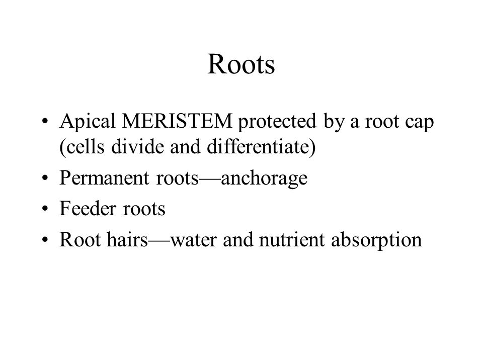 Roots Absorbing roots are concentrated in the top 6-18 inches of soil (water, nutrients and oxygen) Roots cover 4 to 7 times the area of the crown From the MSU AGRSCIENCE WEB PAGE