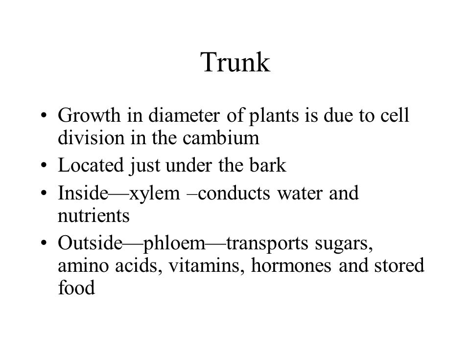Trunk Growth in diameter of plants is due to cell division in the cambium Located just under the bark Insidexylem –conducts water and nutrients Outsid