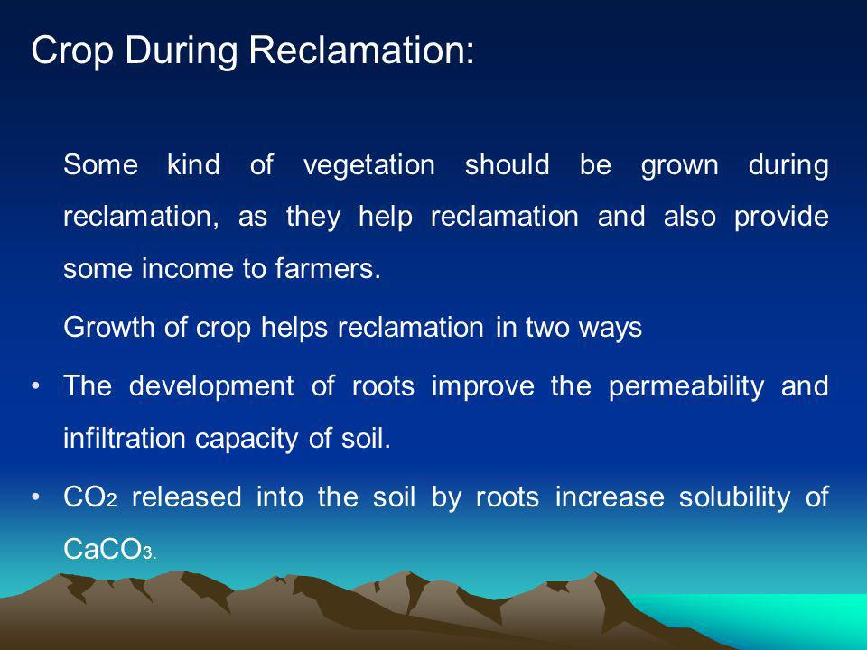 Crop During Reclamation: Some kind of vegetation should be grown during reclamation, as they help reclamation and also provide some income to farmers.