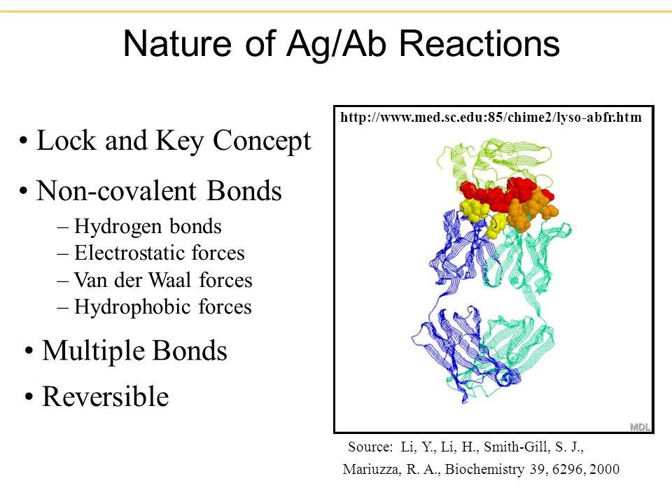 Nature of Ag/Ab Reactions Lock and Key Concept Non-covalent Bonds – Hydrogen bonds – Electrostatic forces – Van der Waal forces – Hydrophobic forces Reversible Multiple Bonds Source: Li, Y., Li, H., Smith-Gill, S.