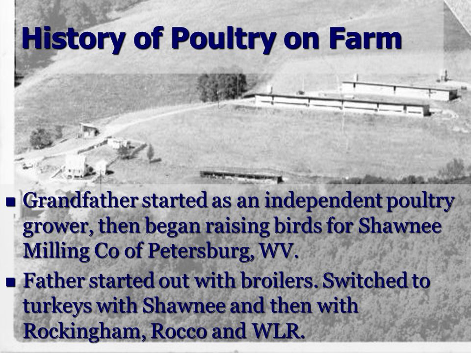 History of Poultry on Farm Grandfather started as an independent poultry grower, then began raising birds for Shawnee Milling Co of Petersburg, WV. Gr