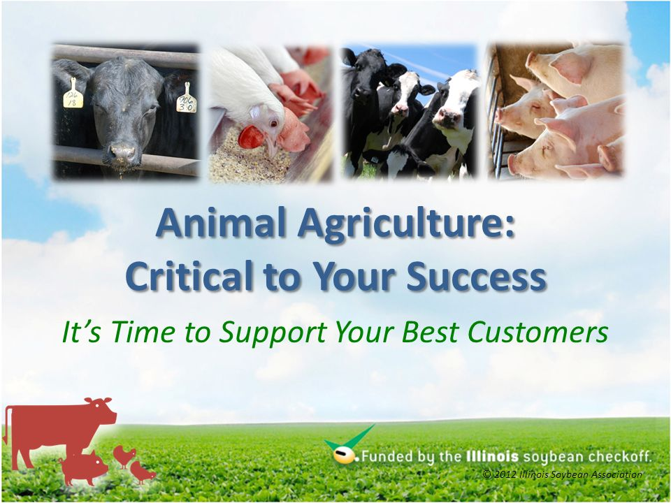 Animal Agriculture: Critical to Your Success Its Time to Support Your Best Customers © 2012 Illinois Soybean Association