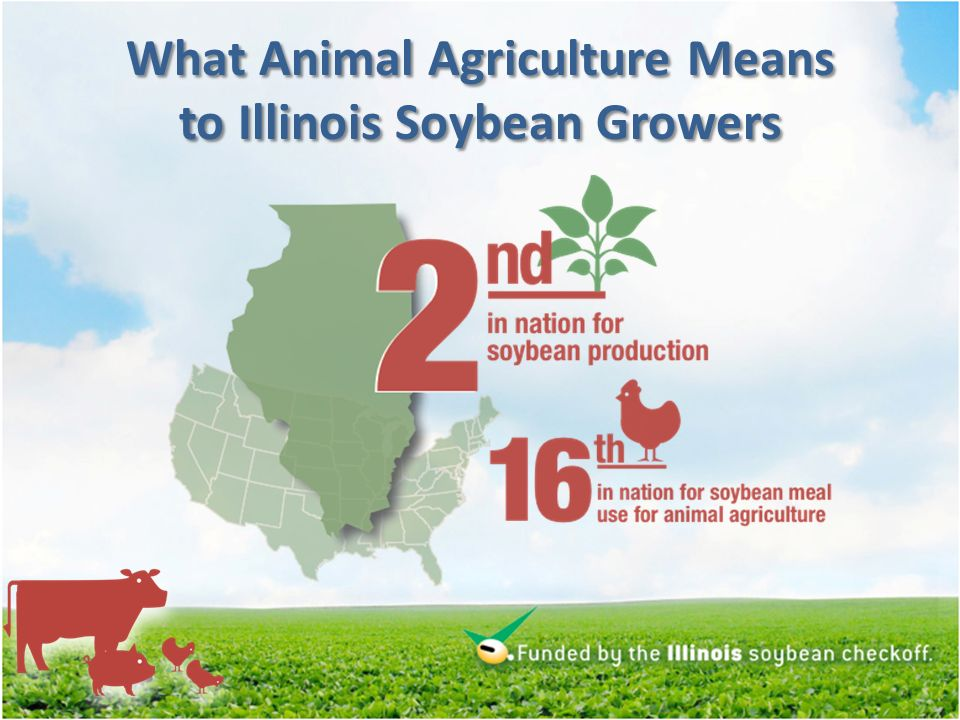 What Animal Agriculture Means to Illinois Soybean Growers