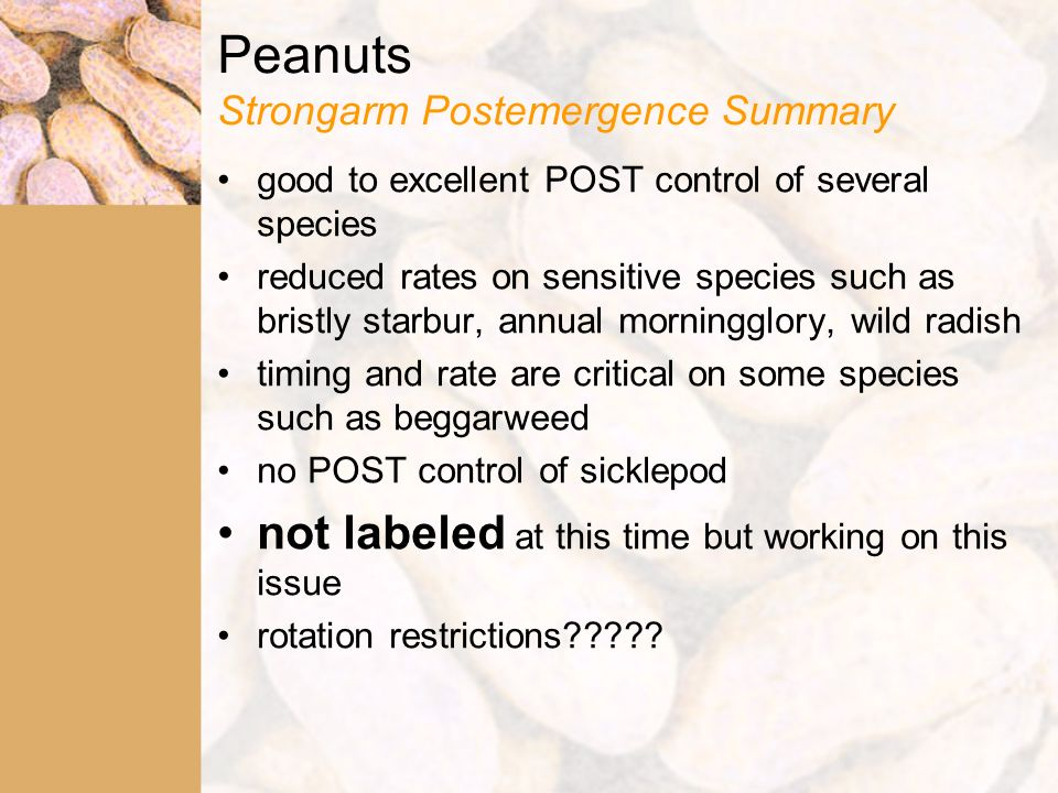 Peanuts Strongarm Postemergence Summary good to excellent POST control of several species reduced rates on sensitive species such as bristly starbur, annual morningglory, wild radish timing and rate are critical on some species such as beggarweed no POST control of sicklepod not labeled at this time but working on this issue rotation restrictions?????