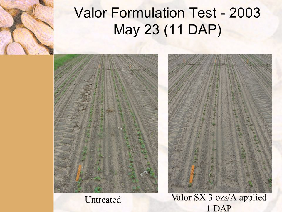 Valor Formulation Test - 2003 May 23 (11 DAP) Untreated Valor SX 3 ozs/A applied 1 DAP