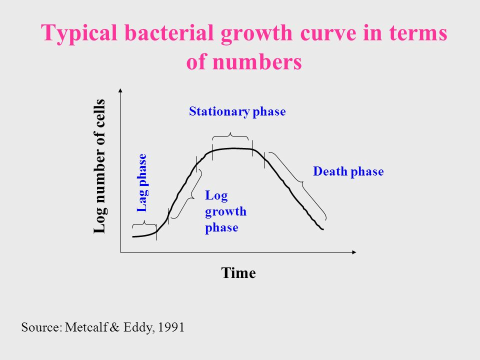 Typical bacterial growth curve in terms of numbers Time Log number of cells Lag phase Log growth phase Stationary phase Death phase Source: Metcalf & Eddy, 1991