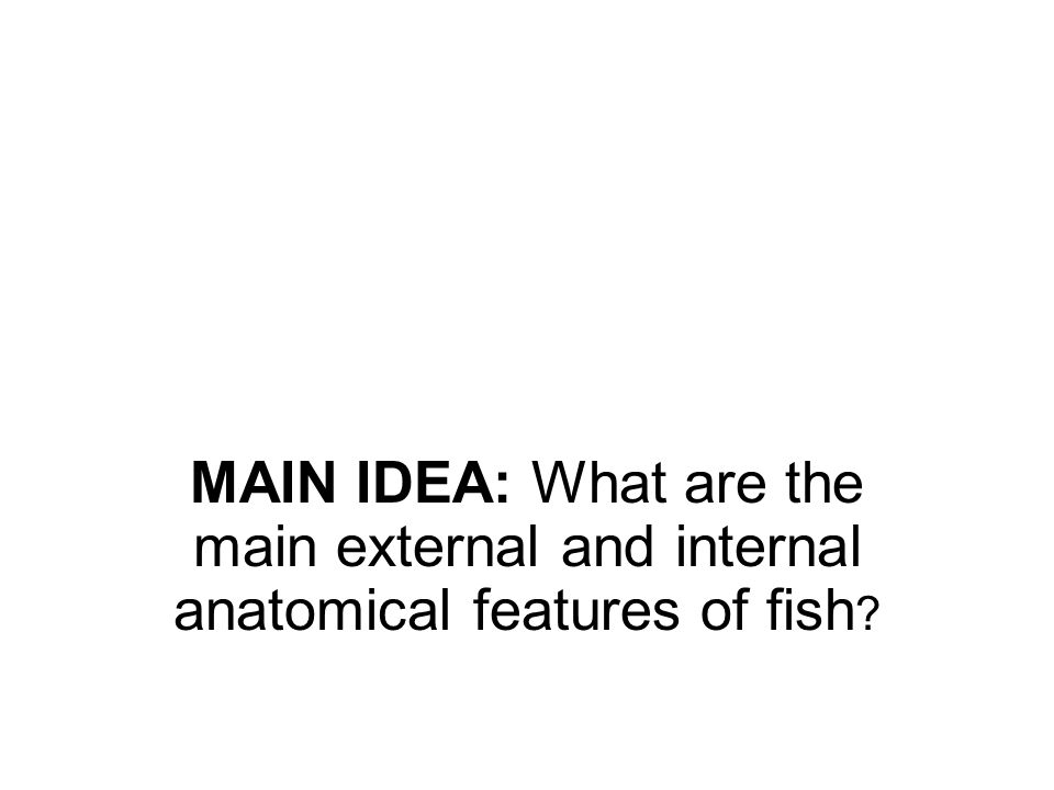 MAIN IDEA: What are the main external and internal anatomical features of fish ?