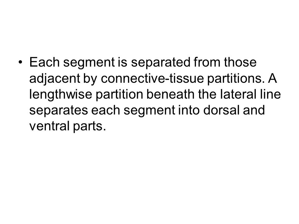 Each segment is separated from those adjacent by connective-tissue partitions. A lengthwise partition beneath the lateral line separates each segment