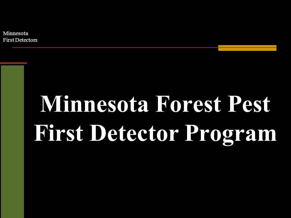 Minnesota First Detectors Minnesota Forest Pest First Detector Program