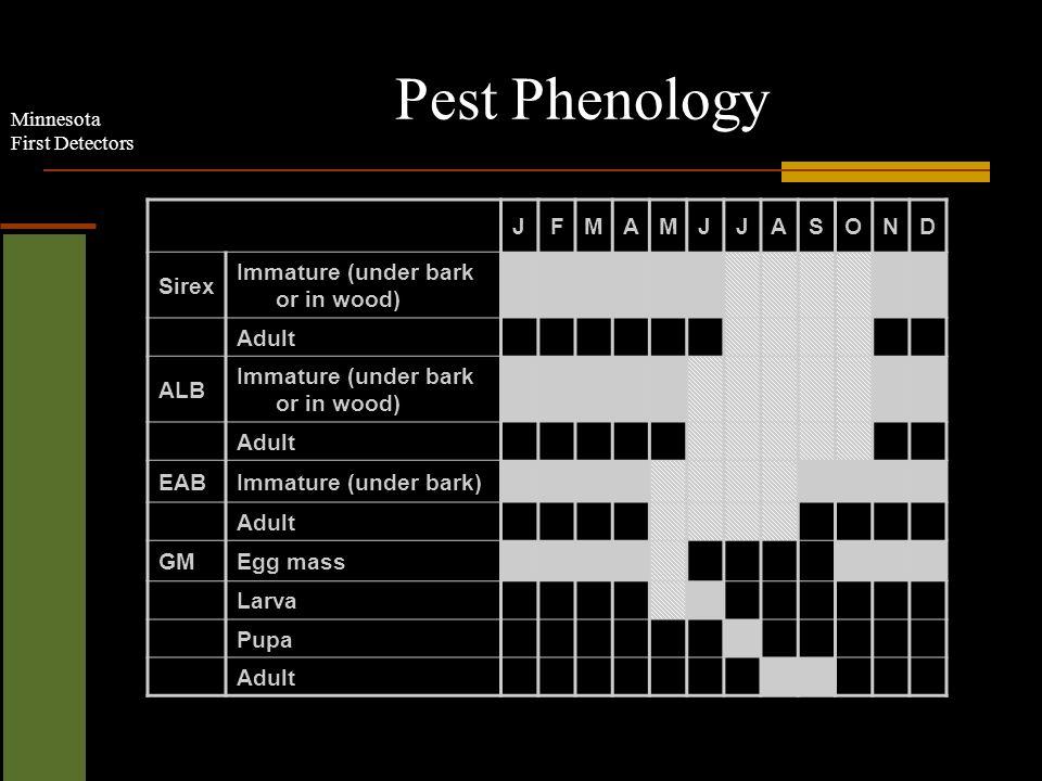 Minnesota First Detectors Pest Phenology JFMAMJJASOND Sirex Immature (under bark or in wood) Adult ALB Immature (under bark or in wood) Adult EABImmature (under bark) Adult GMEgg mass Larva Pupa Adult