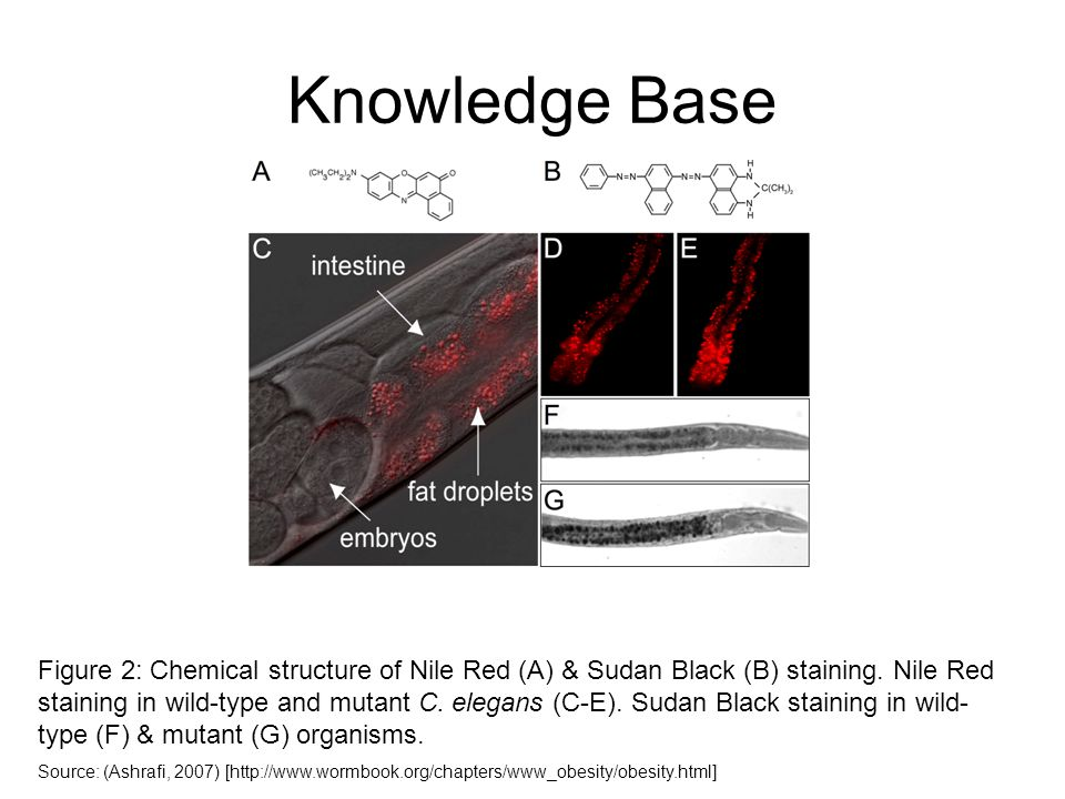 Knowledge Base Figure 2: Chemical structure of Nile Red (A) & Sudan Black (B) staining. Nile Red staining in wild-type and mutant C. elegans (C-E). Su