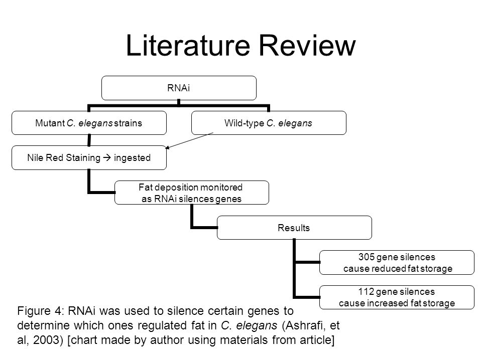 Literature Review RNAi Mutant C. elegans strains Nile Red Staining ingested Fat deposition monitored as RNAi silences genes Results 305 gene silences