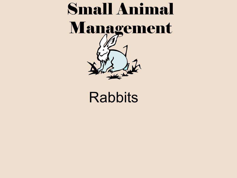 Small Animal Management Rabbits