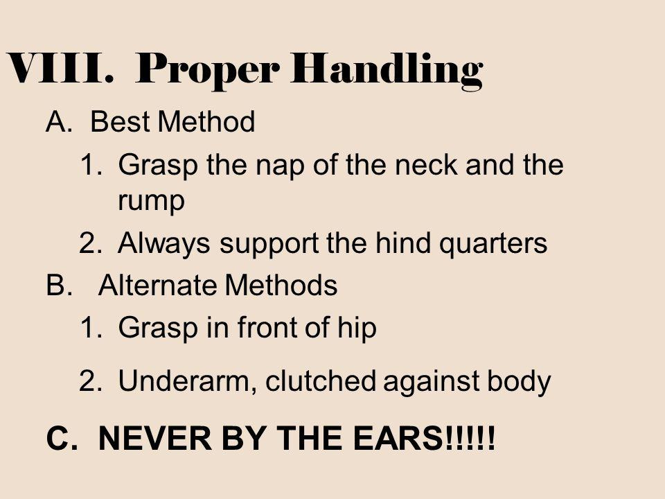VIII. Proper Handling A.Best Method 1.Grasp the nap of the neck and the rump 2.Always support the hind quarters B. Alternate Methods 1.Grasp in front