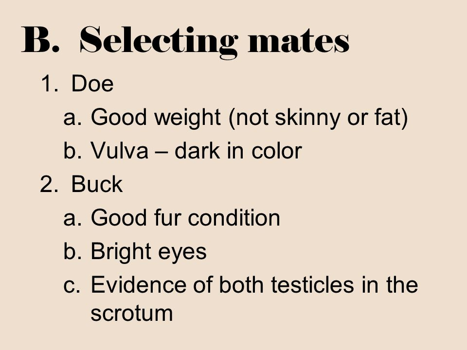 B. Selecting mates 1.Doe a.Good weight (not skinny or fat) b.Vulva – dark in color 2.Buck a.Good fur condition b.Bright eyes c.Evidence of both testic