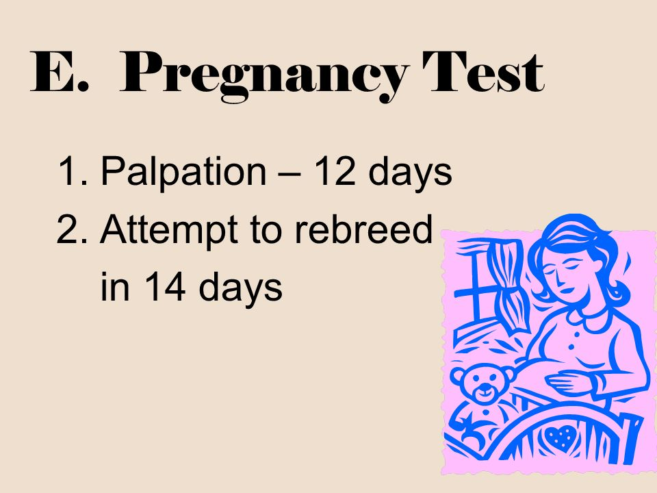 E. Pregnancy Test 1.Palpation – 12 days 2.Attempt to rebreed in 14 days