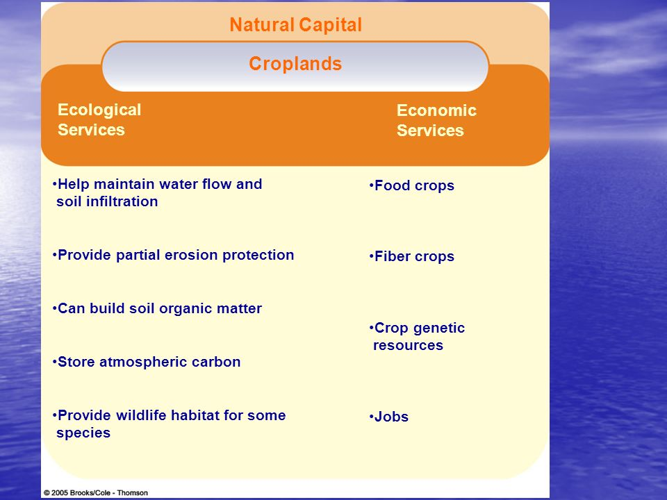 Figure 14-3 Page 276 Croplands Help maintain water flow and soil infiltration Provide partial erosion protection Can build soil organic matter Store a