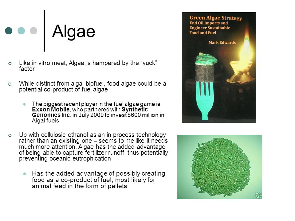 Algae Like in vitro meat, Algae is hampered by the yuck factor While distinct from algal biofuel, food algae could be a potential co-product of fuel a