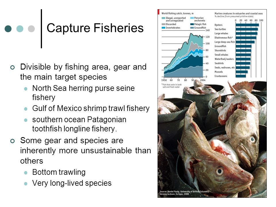 Capture Fisheries Divisible by fishing area, gear and the main target species North Sea herring purse seine fishery Gulf of Mexico shrimp trawl fisher