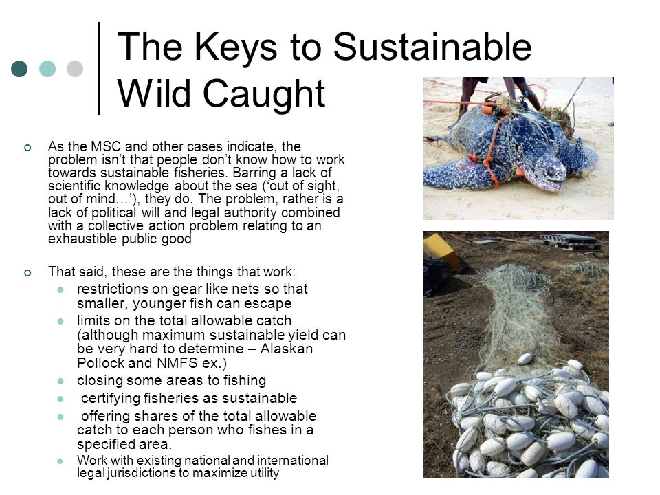 The Keys to Sustainable Wild Caught As the MSC and other cases indicate, the problem isnt that people dont know how to work towards sustainable fisher