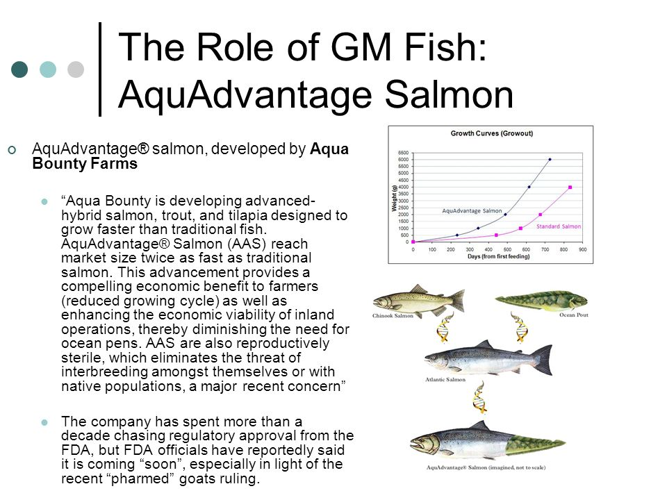 The Role of GM Fish: AquAdvantage Salmon AquAdvantage® salmon, developed by Aqua Bounty Farms Aqua Bounty is developing advanced- hybrid salmon, trout