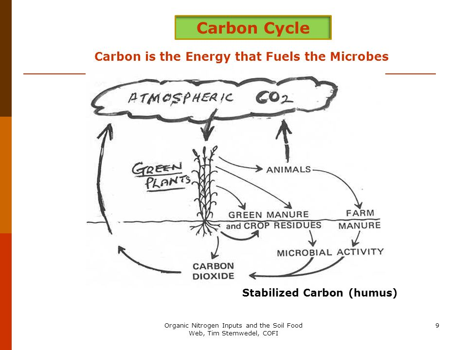 9 Carbon Cycle Carbon is the Energy that Fuels the Microbes Stabilized Carbon (humus)