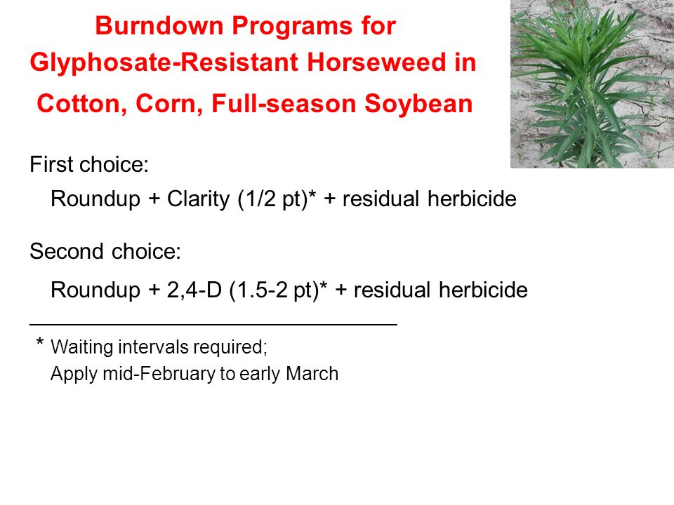 Burndown Programs for Glyphosate-Resistant Horseweed in Cotton, Corn, Full-season Soybean First choice: Roundup + Clarity (1/2 pt)* + residual herbici