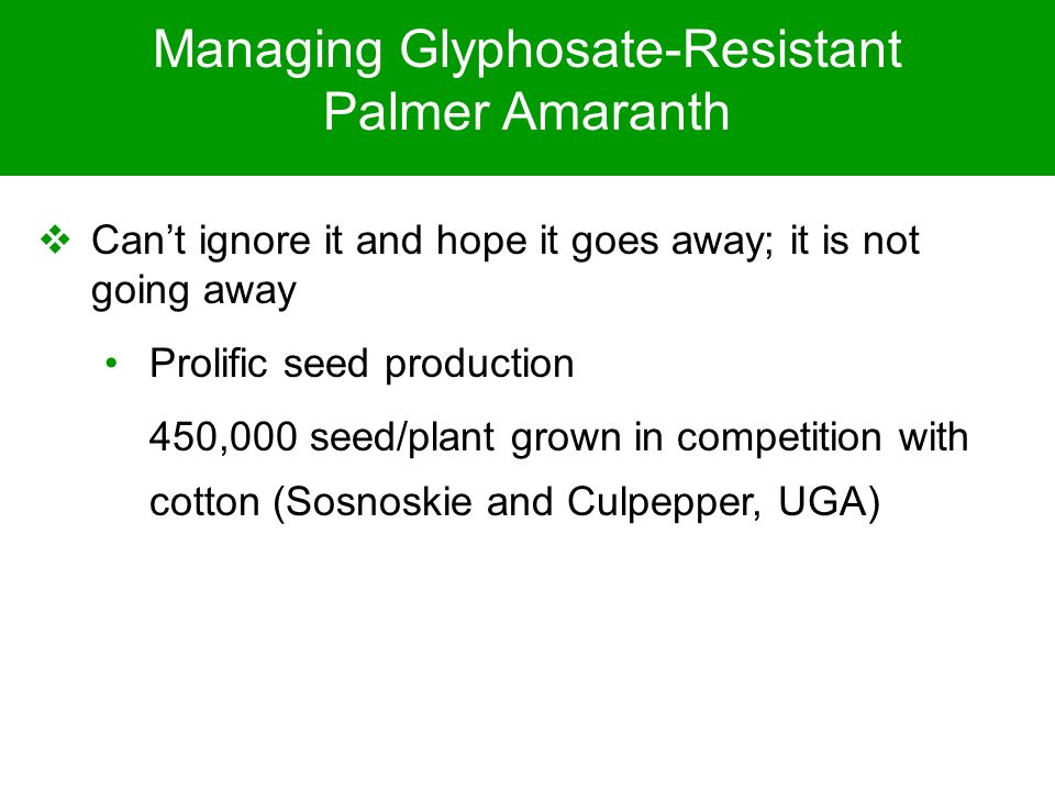 Managing Glyphosate-Resistant Palmer Amaranth Cant ignore it and hope it goes away; it is not going away Prolific seed production 450,000 seed/plant g