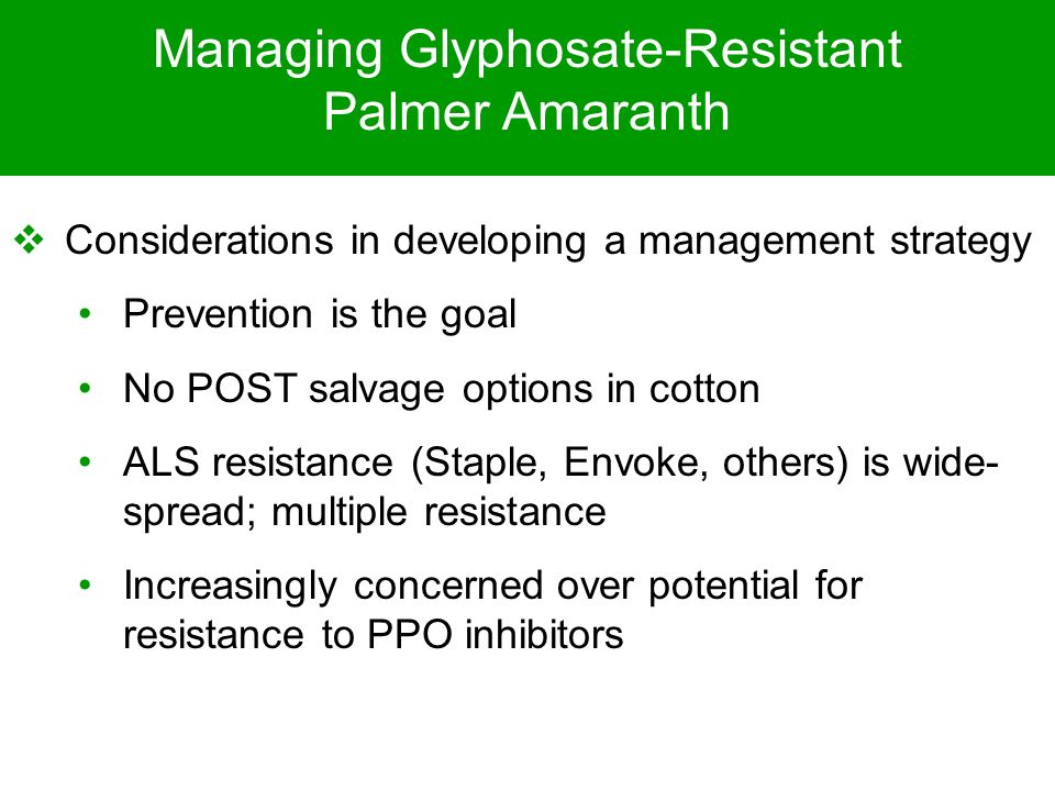 Managing Glyphosate-Resistant Palmer Amaranth Considerations in developing a management strategy Prevention is the goal No POST salvage options in cot