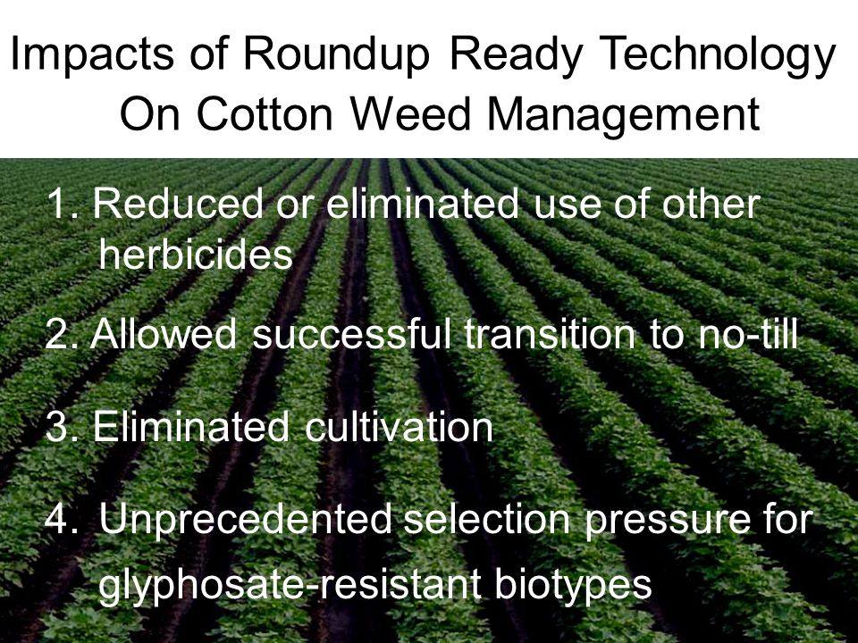 Impacts of Roundup Ready Technology On Cotton Weed Management 1.
