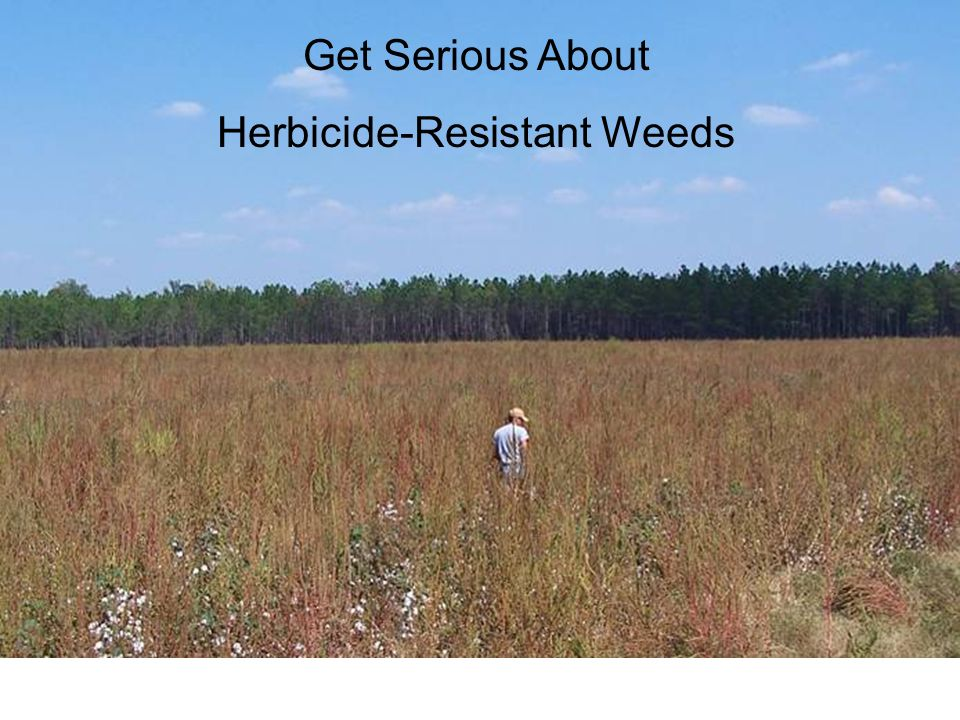 Get Serious About Herbicide-Resistant Weeds