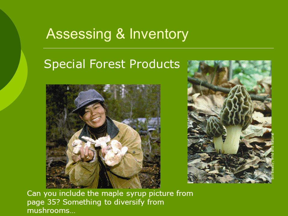 Bill Beatty, Wild and Natural Special Forest Products Can you include the maple syrup picture from page 35? Something to diversify from mushrooms…
