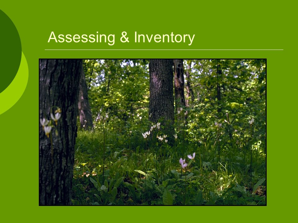 Assessing & Inventory