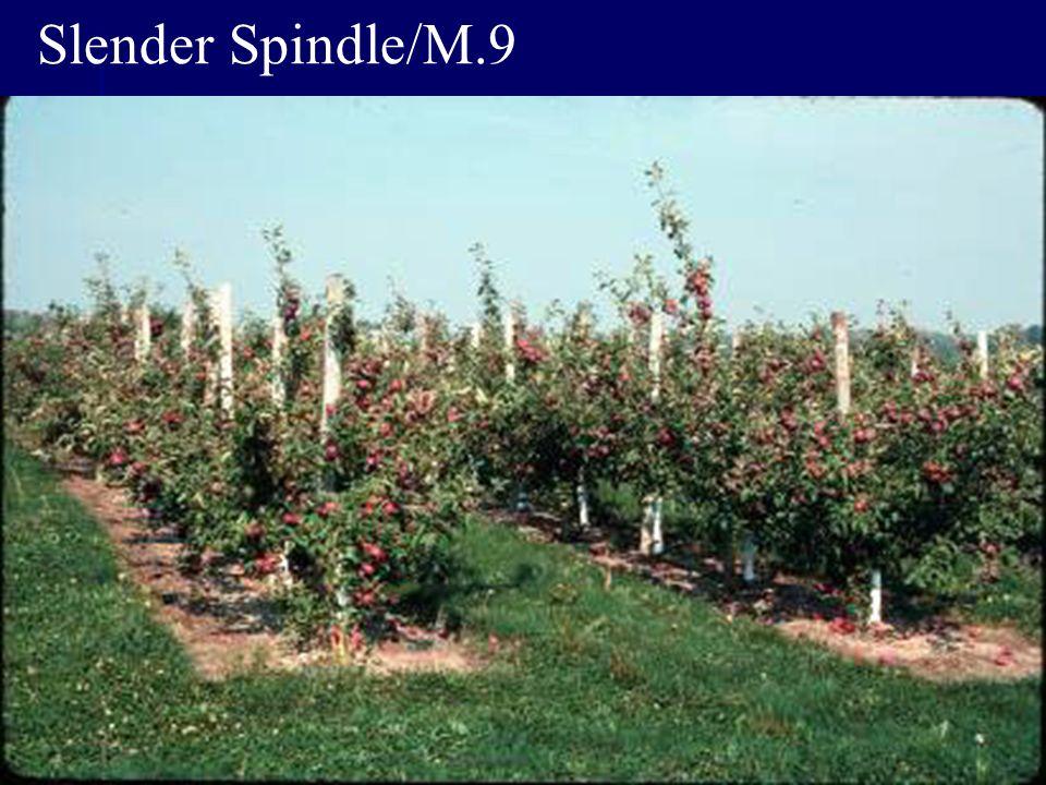 Slender Spindle/M.9
