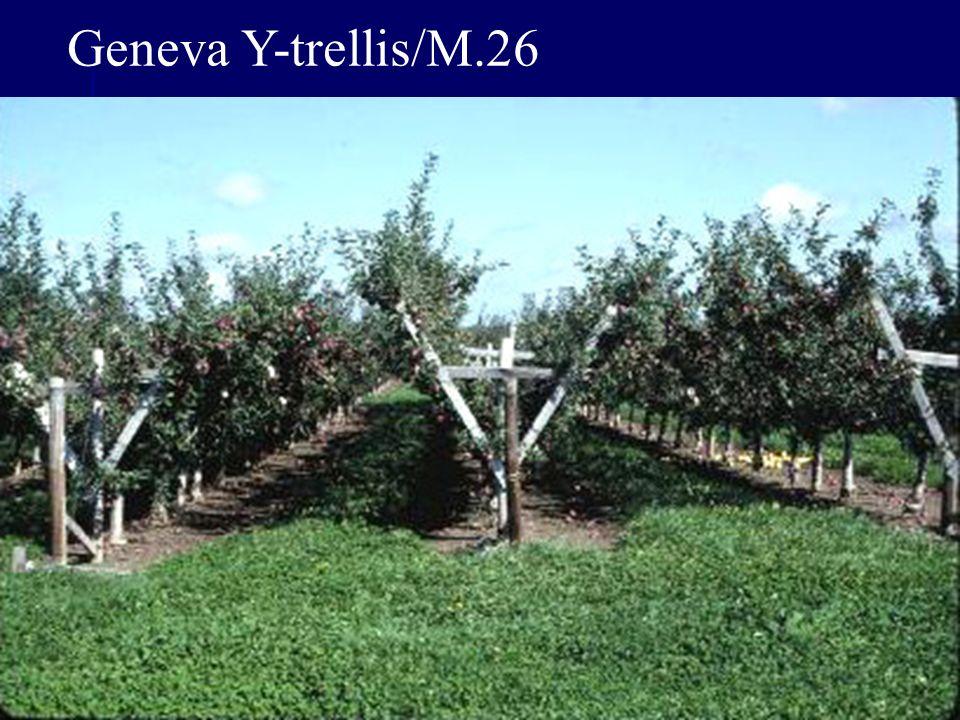 Geneva Y-trellis/M.26